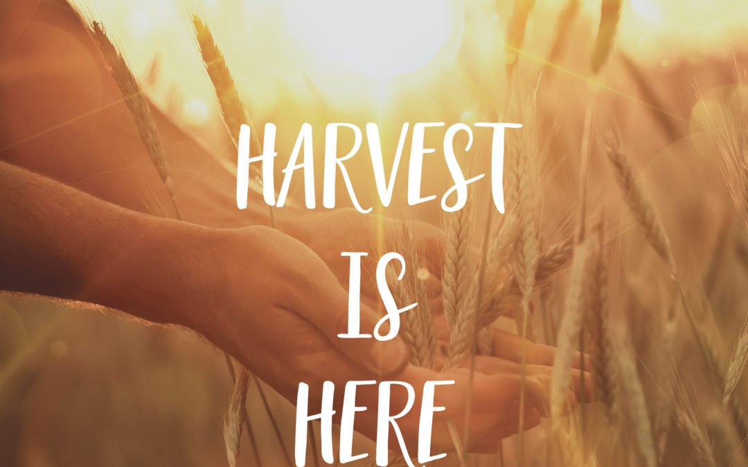 Harvest is Here